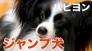 犬用品 ABCDog よりお知らせです http://suzuka-atozphoto.com/dog/top....