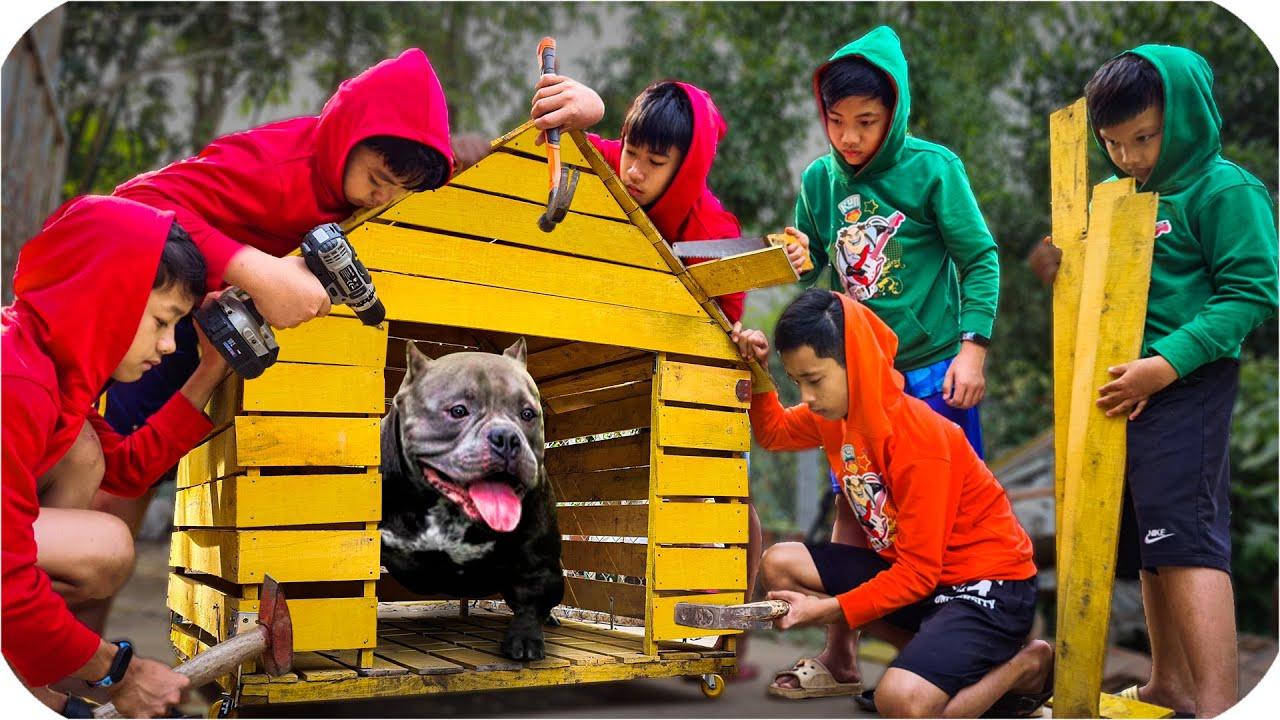 Tony | Xây Biệt Thự Di Động Cho Bull Đệ - Build Villa For Dog