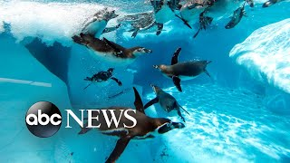 Penguins, The Dance World Cup and Wimbledon: World in Photos, July 2nd