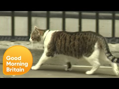 Larry the Cat 'Abandons' Theresa May! | Good Morning Britain