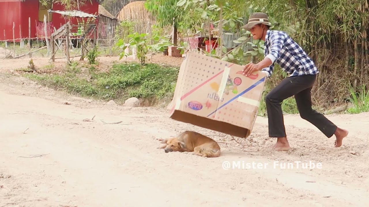 Wow !! Best Funny Prank Blanket Prank on Dog - Very Funny Try to stop laugh-@Mister FunTube