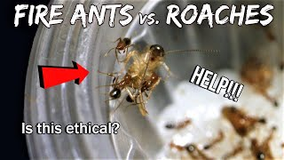FIRE ANTS vs. COCKROACHES | Is this ethical?
