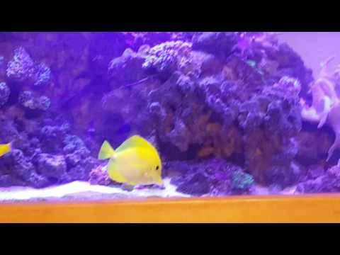 How to set up a basic reef/saltwater aquarium.