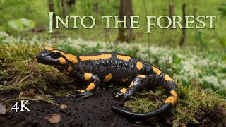 Into the Forest: Amphibian Nature Documentary