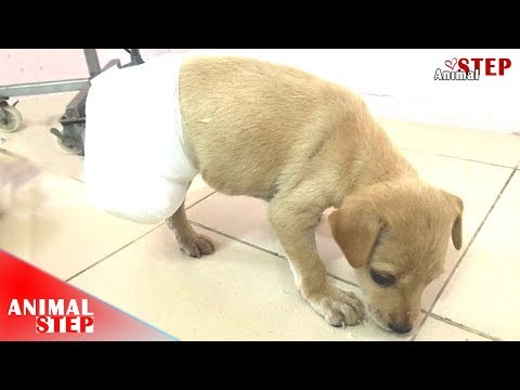 Pitiful Puppy Who Lost A Back Leg - Will Make You Cry