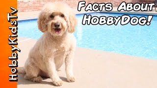 Questions Answered About HobbyDog by HobbyKidsTV