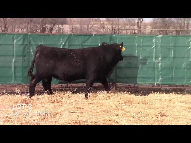 Taliaferro Angus \u0026 T Bar T Angus Ranch - 3