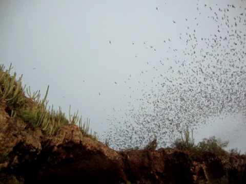 La cueva de los murcielagos