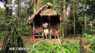 南美五猛兽——巨獭|《魅力纪录》 2014.05.15|CCTV-1