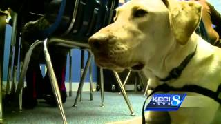 Family Shelter Adds New Therapy Dog