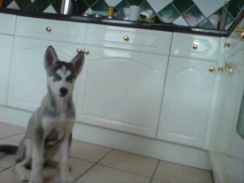 Rocco 'the husky' memories