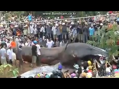 world's-biggest-python-anaconda-giant-snake-found-on-earth-most-amazing-by-tajammul-khan