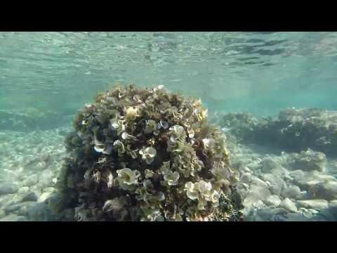 Sutivan (underwater views - beach in the bay) | GoPro