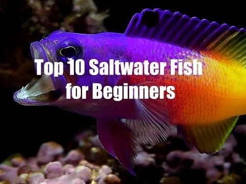 Top 10 Saltwater Fish for Beginners   YouTube