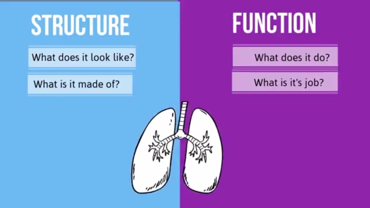 Structure Vs Function In Biology