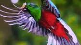 Poema Al Quetzal Ave Nacional De Guatemala Youtube