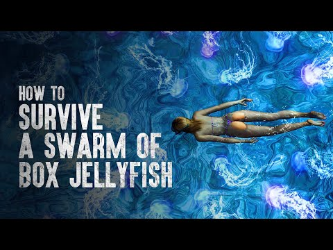 How to Survive a Swarm of Box Jellyfish