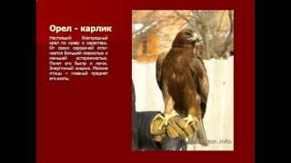 Красная книга Оренбургской области  Животные