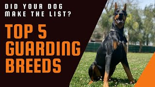 I use 3 criteria to determine the best personal and home protection dogs.