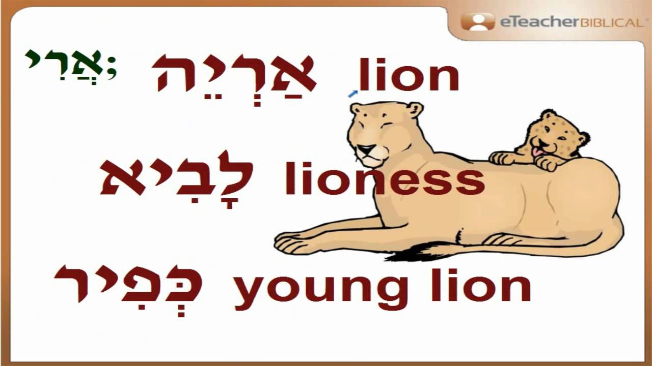 How to say a lion, lioness and a young lion in Hebrew? | Q&A with  eTeacherBiblical com