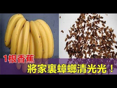 家裏有蟑螂很怕?快點學學阿婆,一根香蕉把家裏的蟑螂清光光!