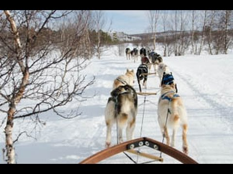 Dog Sledding in Abisko National Park Sweden