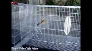 African Lovebirds Breeding Cage Setup