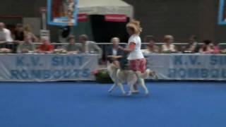 Best In Show Siberian Husky (dysco)