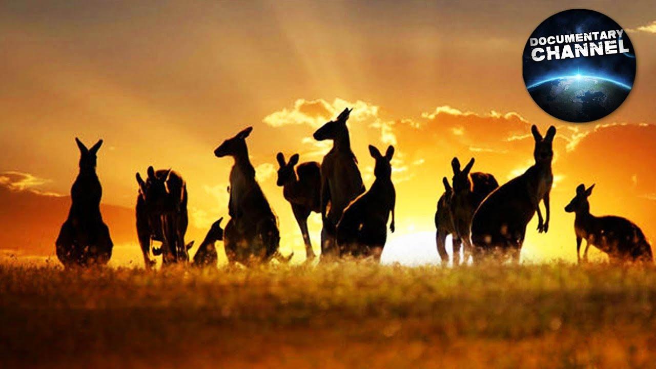 Finne eskorte i australia
