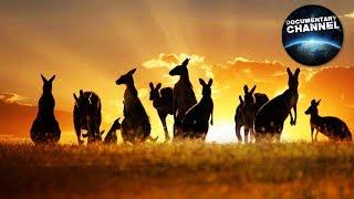 AUSTRALIA seria Imax, cały film