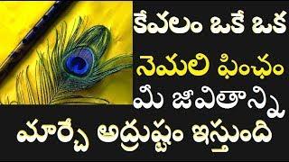 ఒక నెమలి ఫించం మీ అదృష్టాన్ని మీ జీవితాన్ని మార్చేస్తుంది ఎలాగో తెల్సుకోండి/Peacock Feather In Home