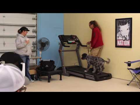 How To, DIY Treadmill Training for dogs, Solid K9 Training