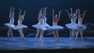 My First Ballet: Swan Lake – short swan excerpt | English National Ballet