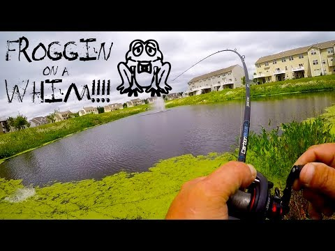 Froggin on a Whim