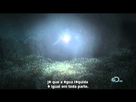 Exploring Space . Designs of Alien Life . Europa Quiz | PBS