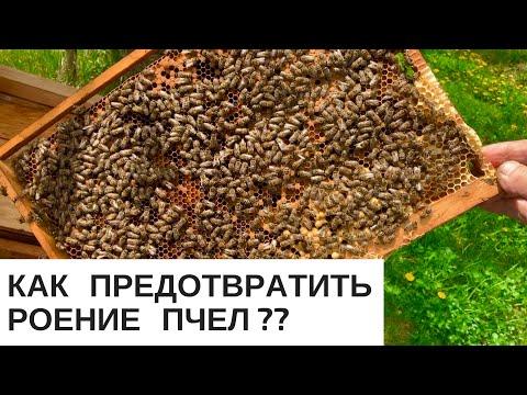 Причины роения пчел и как его предупредить видео