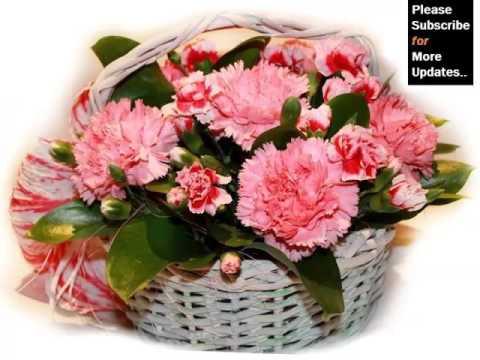 Pink Carnation Flower Wallpaper | Combination Of Marvelous Carnation Flower Pictures