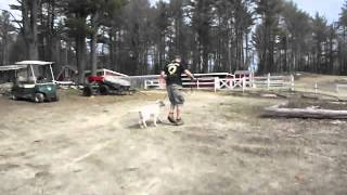 Olympia Kennels / Dog Obedience (chester Nh) Tucker Part Ii