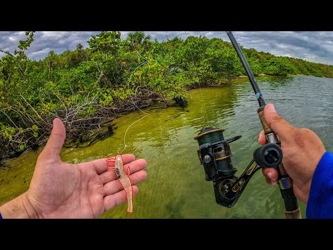 Flats Fishing With Artificial Shrimp + Fish Can't Resist This Bait