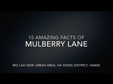 Mulberry Lane – 15 AMAZING FACTS