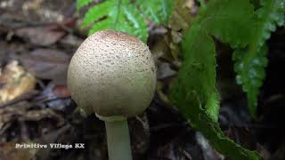 Primitive Life Solo Bushcraft in forest meet big catfish Unique hand fishing catch big fish