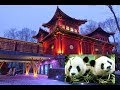 Our Pandasia Adventure in Ouwehands Animal Park Rhenen 27-05-2017 Vlog 219