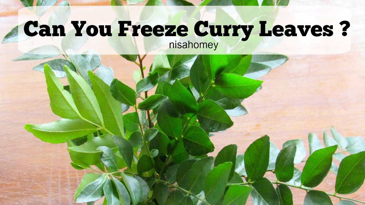 How To Freeze Curry Leaves - Can You Freeze Curry Leaves