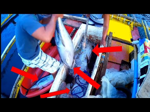 AWESOME TRADITIONAL FISHING In The Philippines | TUNA FISHING TECHNIQUE | FILIPINO TUNA FISHING