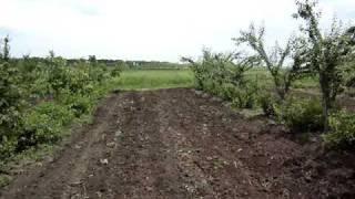 Ореховый сад - эффективное использование почвы(Орех грецкий долгожитель, коммерческий урожай даёт с 6-8 года жизни, для ускорения окупаемости сада я рекоме..., 2010-06-14T15:40:52.000Z)