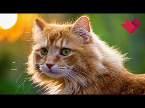 'Нераскрытые тайны': Кто такие кошки