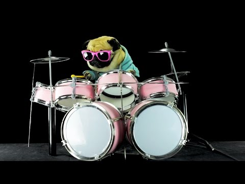 Dog is playing drums - Metallica Enter Sandman