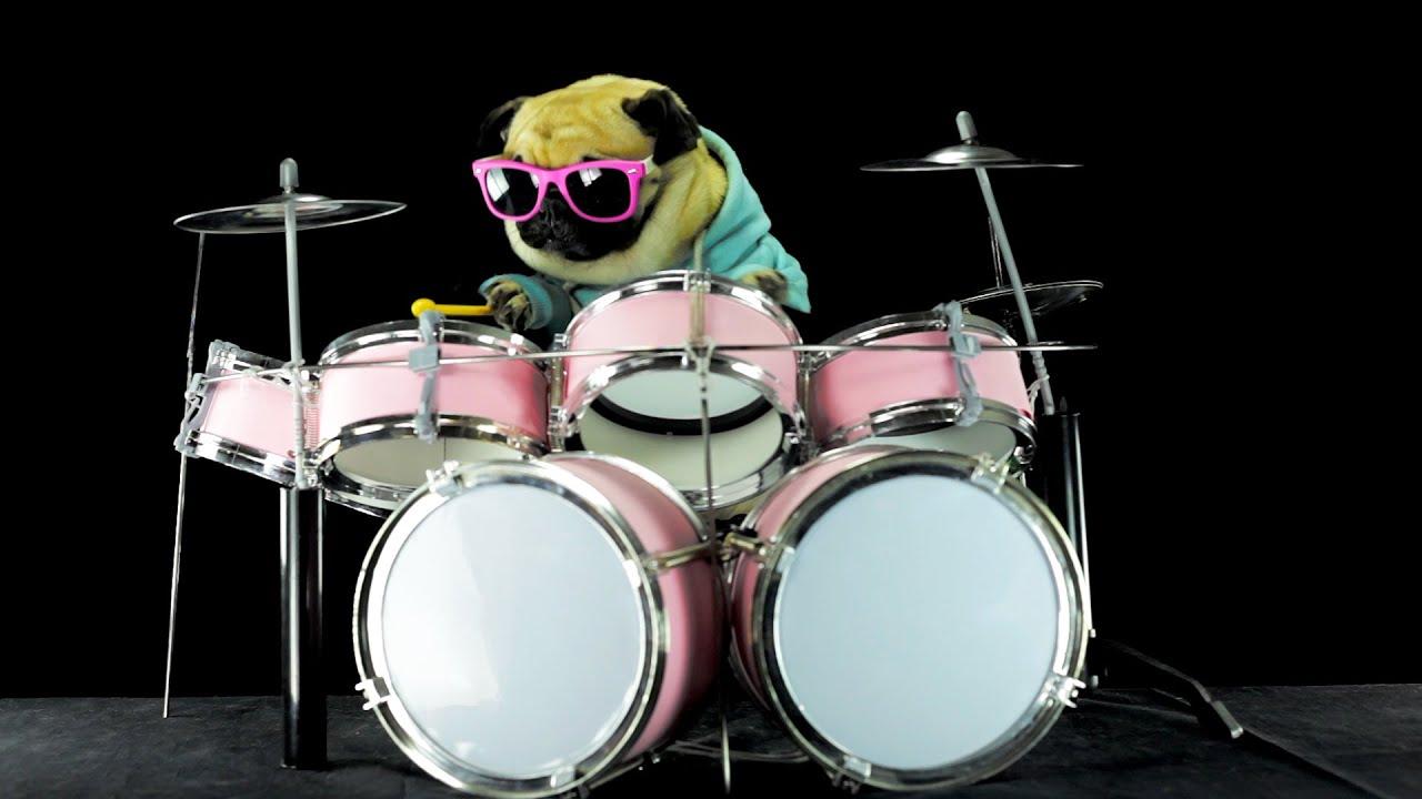 Dog Is Playing Drums Metallica Enter Sandman Youtube
