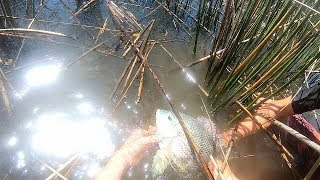 Bowfishing Invasive Tilapia - Australia