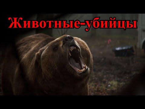 ТОП10 фильмов про животных-убийц (Часть 3)